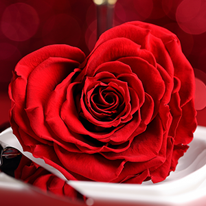 Valentines-red rose on table