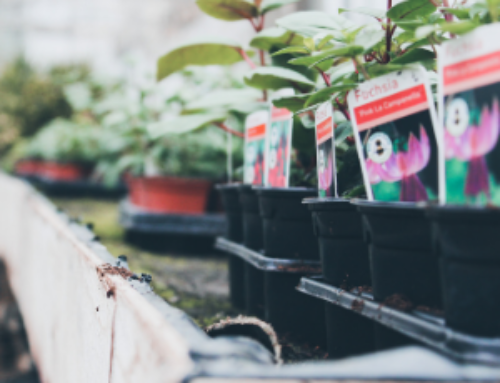 Why your Plant Nursery needs a Quality Point of Sale